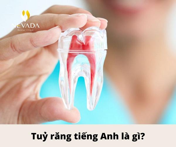 bọc răng sứ tiếng anh là gì, răng sứ tiếng anh, răng sứ tiếng anh là gì, bọc răng sứ tiếng anh, răng giả tiếng anh là gì, sứ tiếng anh là gì, chỉ nha khoa tiếng anh, cao răng tiếng anh, răng hô tiếng anh, răng hô tiếng anh là gì, răng sứ tiếng anh gọi là gì, răng đều tiếng anh là gì, sâu răng tiếng anh là gì, răng sứ thẩm mỹ tiếng anh là gì, tẩy trắng răng tiếng anh là gì, tủy răng tiếng anh là gì, boc rang su in english, rang su in english, răng sứ in english, lấy cao răng tiếng anh là gì