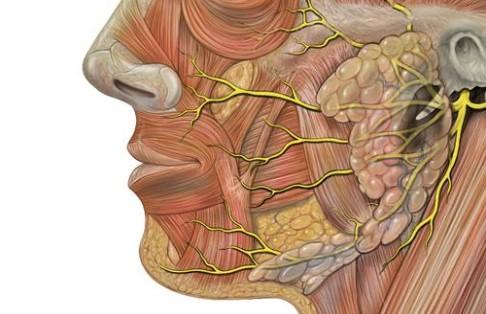 nhổ răng có ảnh hưởng đến thần kinh, nhổ răng có ảnh hưởng đến thần kinh không, nhổ răng có ảnh hưởng đến dây thần kinh không, nhổ răng có ảnh hưởng thần kinh không