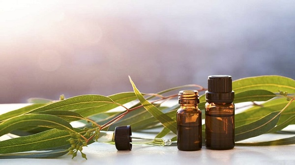 cách chữa hôi miệng bằng dầu tràm, chữa hôi miệng bằng dầu tràm, chữa hôi miệng bằng tinh dầu tràm