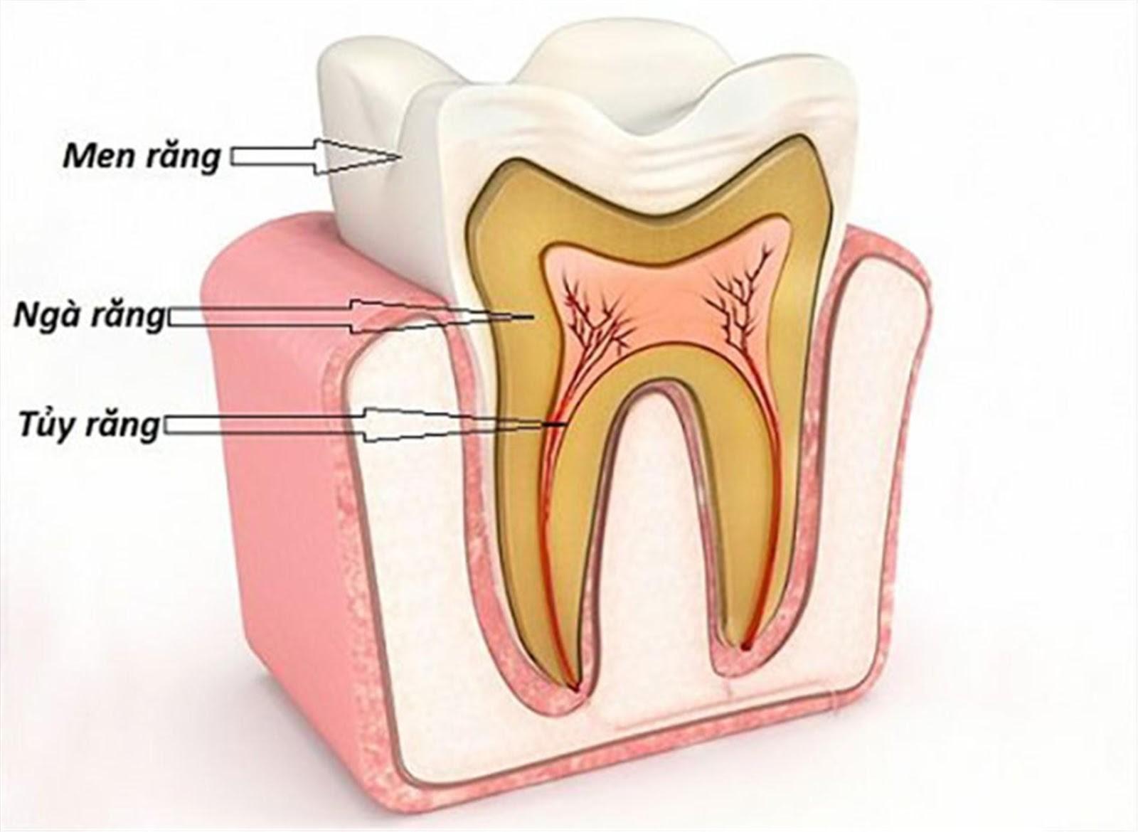 bọc răng sứ sau khi lấy tủy bao nhiêu tiền, giá bọc răng sứ sau khi lấy tủy, giá bọc răng sứ cho răng sau lấy tuỷ bao nhiêu tiền